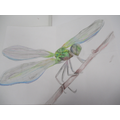 Coco's lovely insect sketch with watercolours