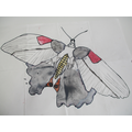 Sketching insects in the style of Levon Biss