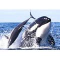 Our seas provide habitat for 44,000 species