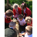 We are learning lots about minibeasts