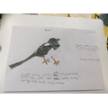 Magpie by Sam