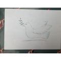 Chloe's Dove