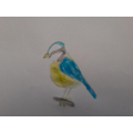 Blue Tit by Lily