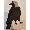 Thomas' collage of a Jackdaw