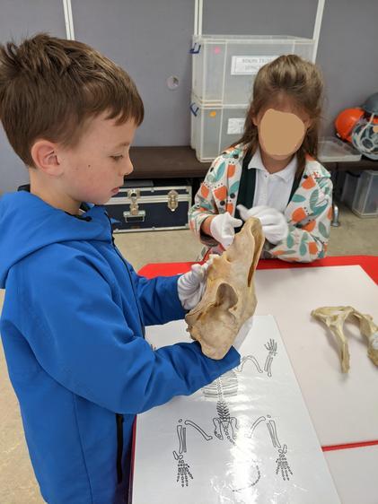 Examining bones!