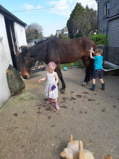 Super helpful siblings looking after the horses.