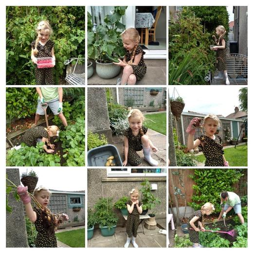 Emily has been harvesting fruit and veg!