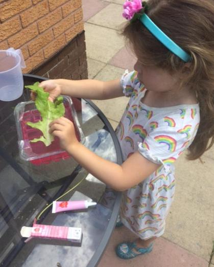 Lucy has been learning about how xylem transport water from the soil to the leaves of plants
