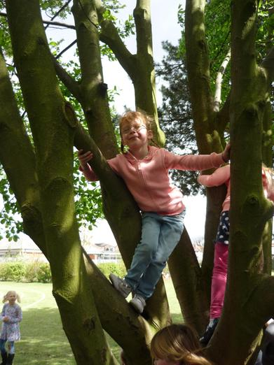 We had fun climbing trees!