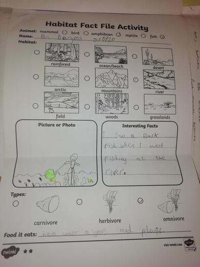 BEn's fact file on habitats ⭐️