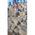 Reading on the Giants' Causeway - wow!