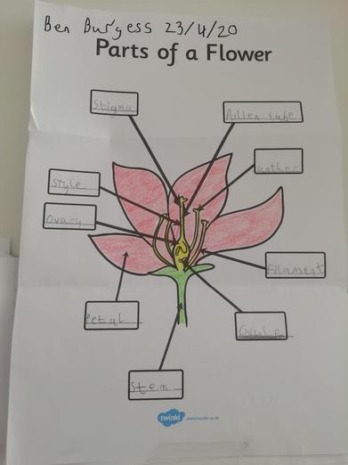 Ben's been learning about flowers and pollination.