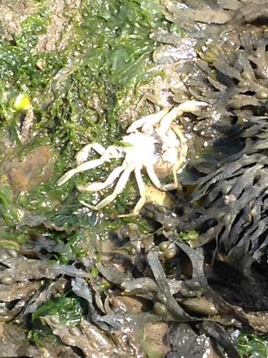 We found plenty of crab shells.