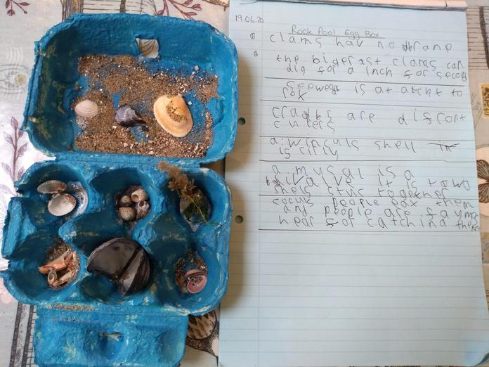 A Rock pool egg box by Emily.