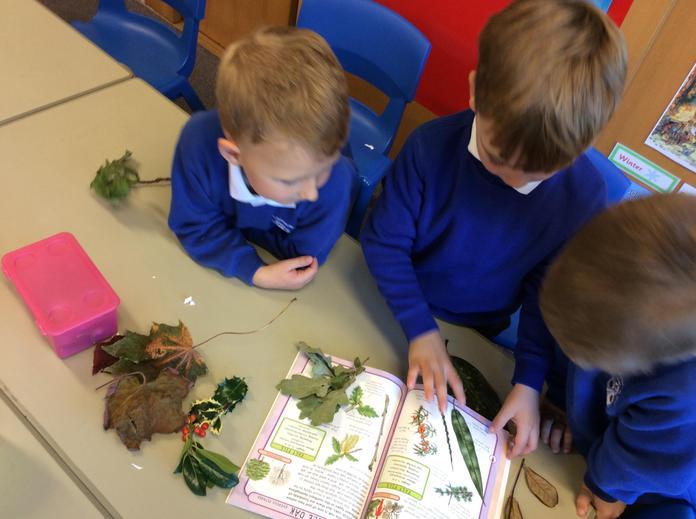 Boys identifying leaves