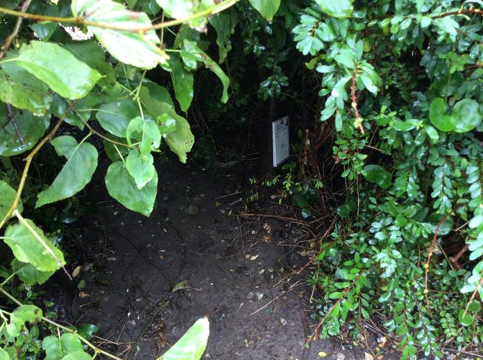 Could Peter hide in this dark, damp bush?