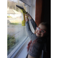 Grace cleaning the windows!