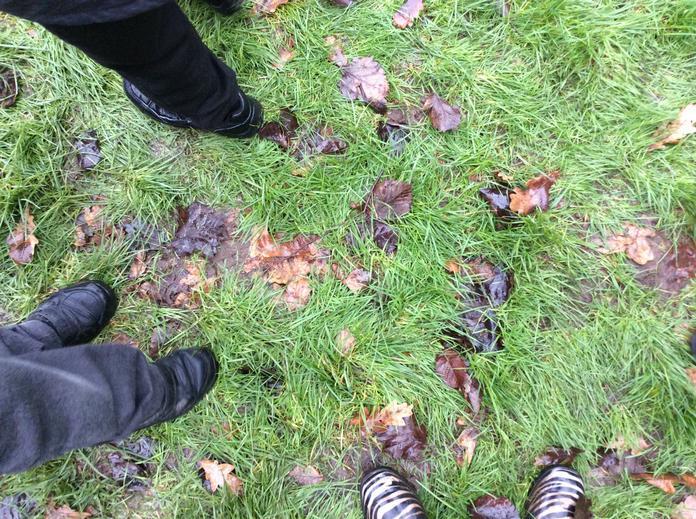 Brown leaves.