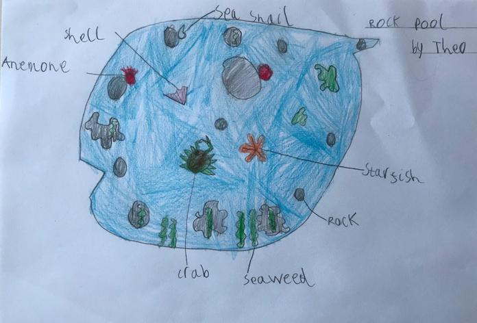 Theo's rock pool diagram.