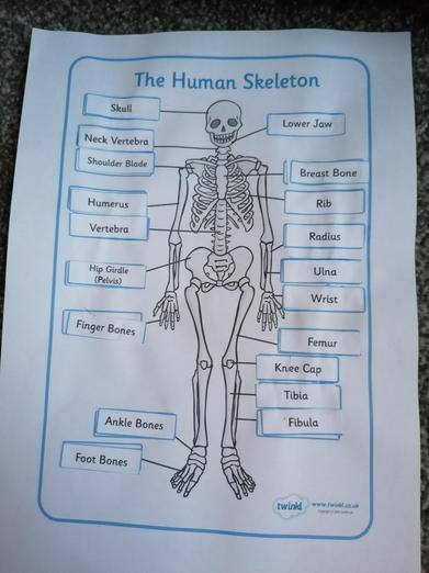 Super labelling of the human body, Ruby!
