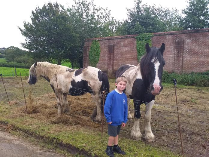 How lucky is this cheeky chap to have horses right nextdoor!  Meet Billy and Floyd 😍