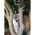 Jessie reading in a tree!