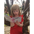 Reading in the blossom tree!