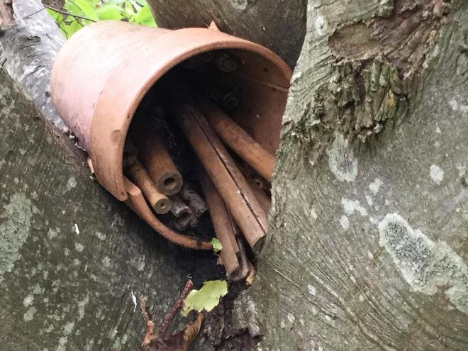 Last year bug hotel - with resident snails!