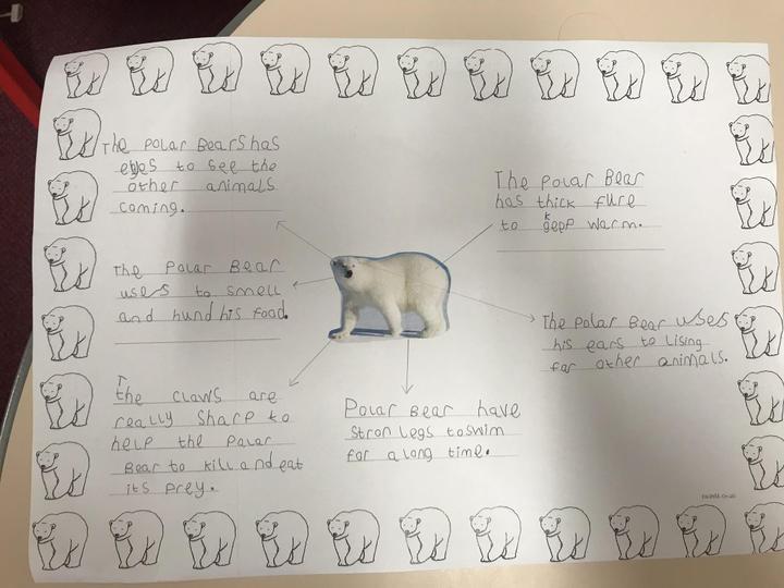 Writing how polar bears adapt to their environment