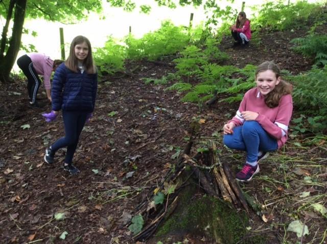 Habitat piles in the woods