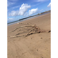 this tree had washed up on the beach