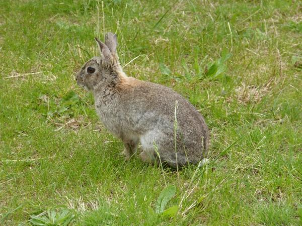 Our wild rabbit keeping an eye on things!