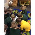 This week we explored animal groups.