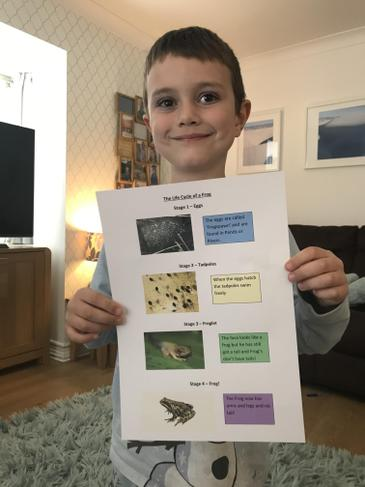 J finding out about the life cycle of a frog