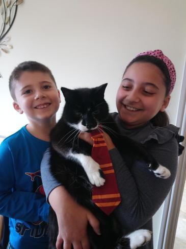 Max the cat is eager to start at Hogwarts School