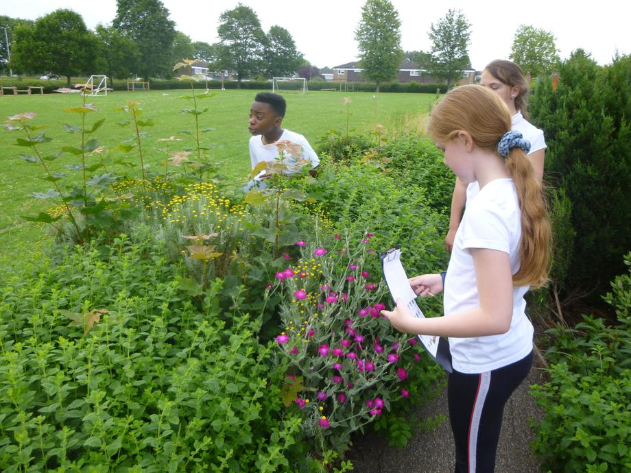 Year 5: Collecting data