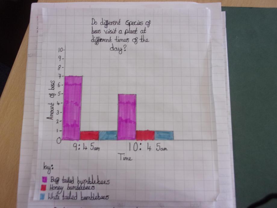Year 6: Bar graph