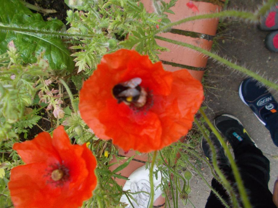 Bee survey