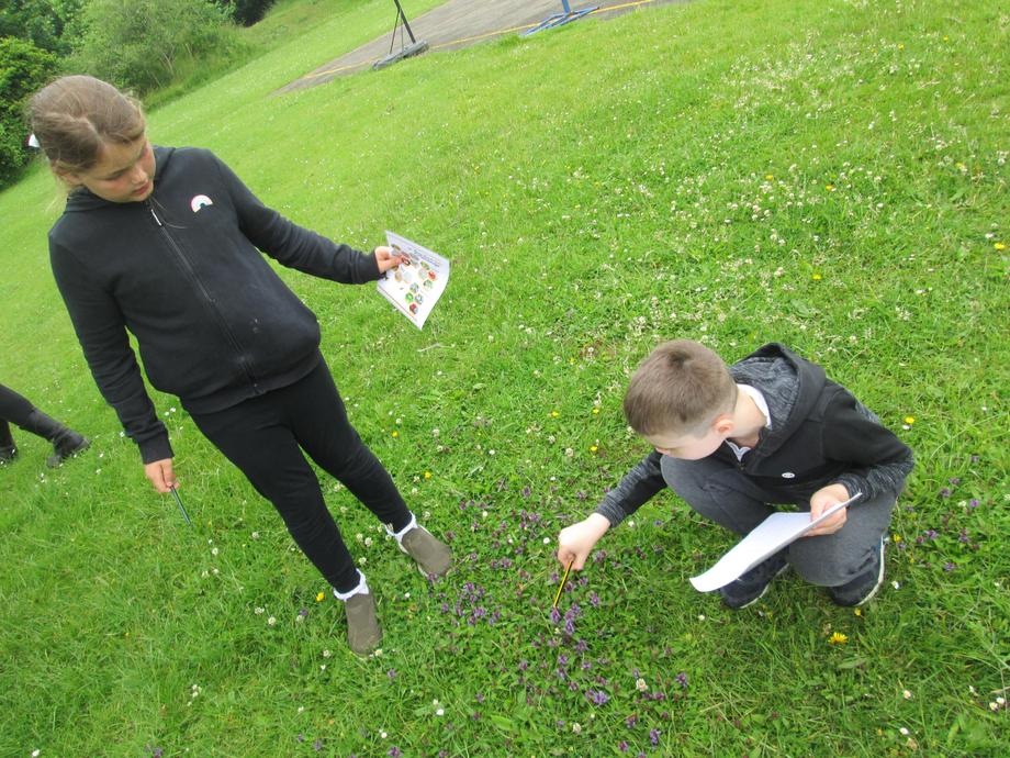 Year 3: Collecting data