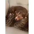Ava A got a new puppy - Meet Roxy!!