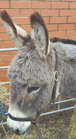 Rupert the donkey!