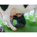 Milking the cow!!