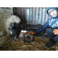 Happy birthday William and this little lamb!
