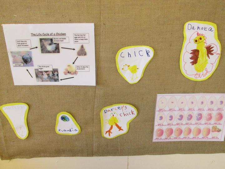 We have already drawn some chick pictures
