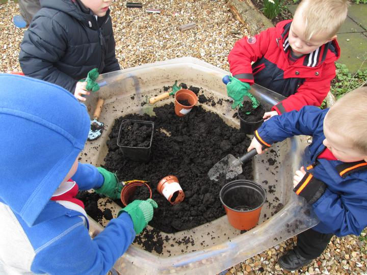 Planting beans and peas