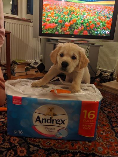 Nala the Andrex puppy!
