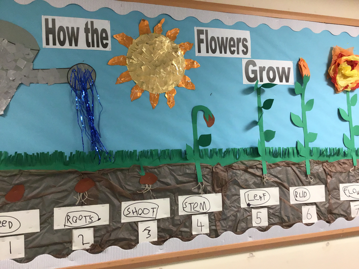 Our Flower growing display