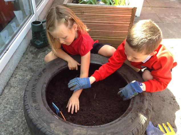Planting tomato seeds.