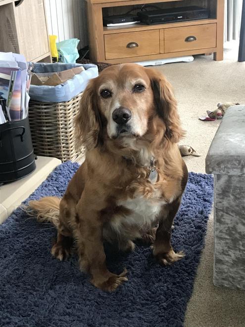 Mum's dog Oliver