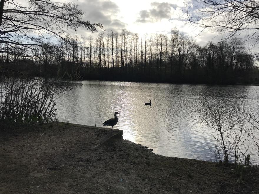 Lakeside on my run yesterday